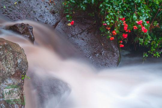 penampakan suasana pemandangan kondisi terkini air sungai coban rondo pujon malang berwarna cokelat saat terjadi banjir besar menelan korban jiwa 2011