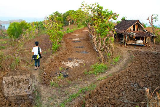 cabang-cabang jalan menuju pantai jungwok yang masih berupa jalan tanah