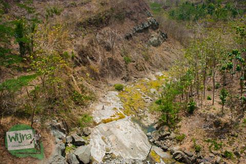 Fenomena pohon-pohon tumbang Gunungkidul