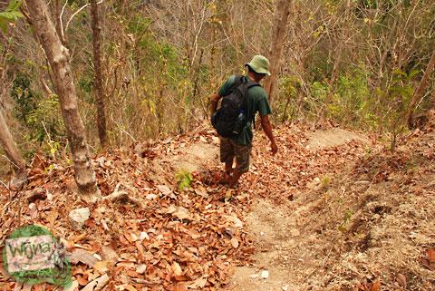 timbunan daun kering di pelosok hutan gunungkidul saat musim kemarau