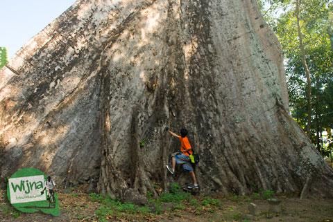 misteri sejarah makam dan pohon randu alas raksasa dekat masjid Kauman Keraton Pleret di Pleret, Bantul