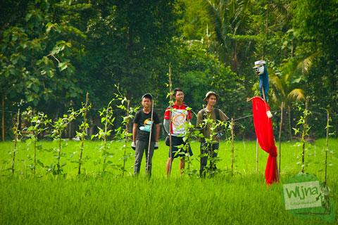 Penampakan Memedi Sawah di Desa Wisata Candran, Kebonagung, Imogiri, Bantul