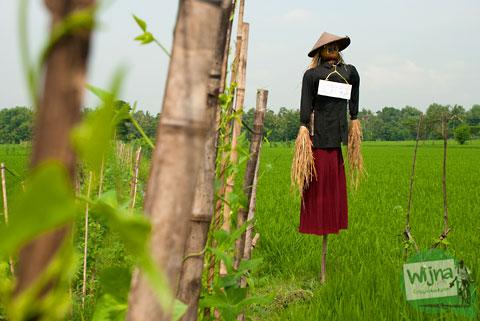 Lokasi Festival Memedi Sawah di Desa Wisata Candran, Kebonagung, Imogiri, Bantul