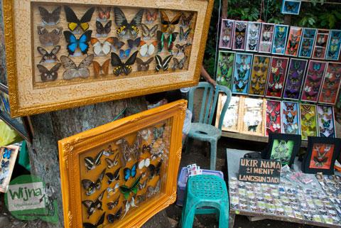 Jual kupu-kupu awet warna-warni harga murah dari Sulawesi, Kalimantan, Papua, dan Sumatra