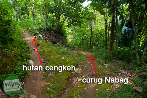 Cabang jalan hutan menuju air terjun tersembunyi di Perbukitan Menoreh wilayah Purworejo, Jawa Tengah