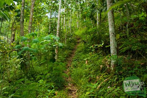 Suasana hutan mistis cerita mahasiswi di dusun Benowo, Purworejo, Jawa Tengah