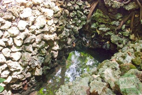 Akar pohon besar yang merupakan sumber air dari Mata Air Ngeleng yang ada di Desa Giritirto, Purwosari, Gunungkidul