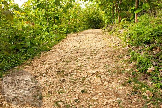 Jalan tanah berbatu karang tajam kondisi rusak parah menuju ke Laut Bekah, Purwosari, Gunungkidul pada tahun 2012