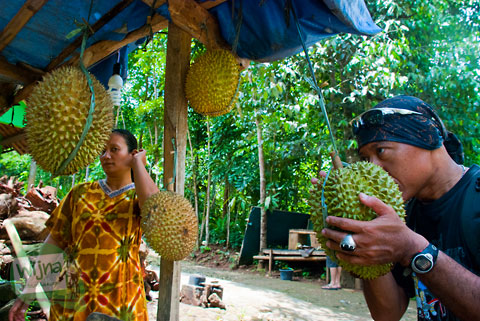 memilih mana durian yang enak dan murah di desa ngoro-oro patuk gunungkidul