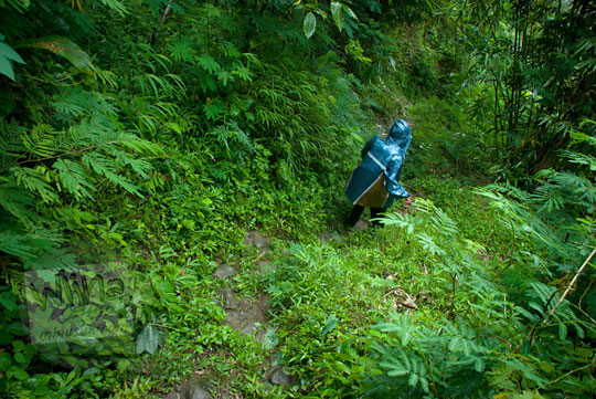 Suasana pedalaman hutan di perbukitan Menoreh di Loano, Purworejo, Jawa Tengah