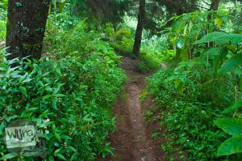 jalan setapak masuk hutan menuju ke lokasi Air Terjun Sikunir di Garung, Wonosobo