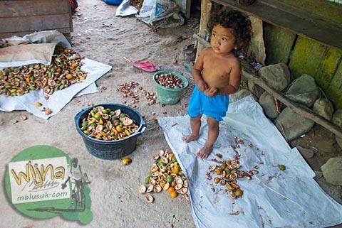 gadis belia pengupas buah pinang di pelosok Padang, Sumatera Barat.