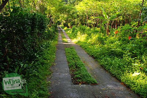 jalan setapak membelah hutan berwujud jalan cor semen dua lajur yang ada di lereng Merapi di Cangkringan, Yogyakarta