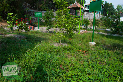 Rumput Liar yang tumbuh lebat di kawasan Taman Gajah Wong Park, Umbulharjo, Yogyakarta
