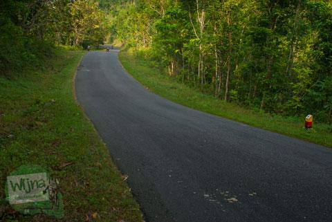 Hutan lebat di Jalan Raya Siluk - Panggang membahayakan pemudik.