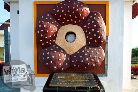 Wisata bunga Rafflesia mekar di Bengkulu sepanjang tahun