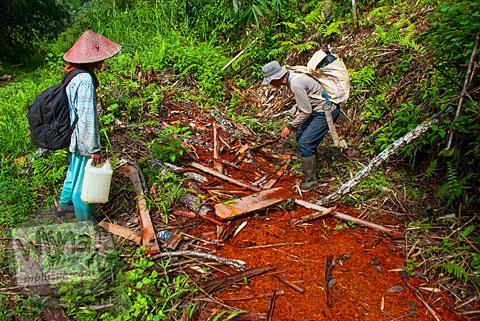 Kebun pohon kayu manis di sekitar Air Terjun Pendung Mudik di Kerinci, Jambi