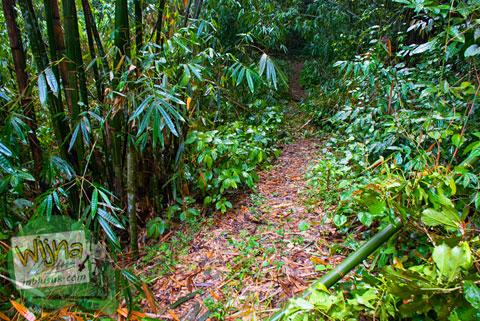 Suasana hutan menuju Air Terjun Pendung, Kerinci, Jambi