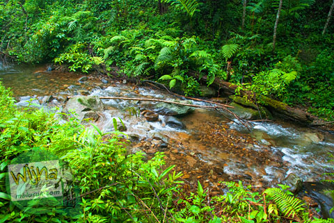 Menyusuri sungai menuju Air Terjun Pendung, Kerinci, Jambi