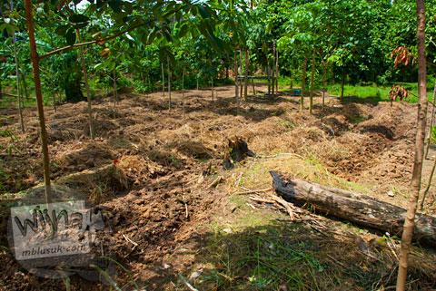 Ladang Warga di Candi Kedaton di Muaro Jambi