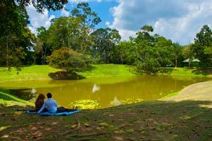Lokasi Mojok di Kolam Telago Rajo Muaro Jambi