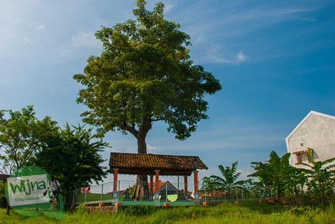 Pohon Besar Keramat di Taman Makam Pahlawan Ratna Bantala Klaten