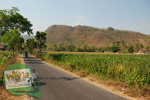 Suasana Persawahan di Sendang Mandong, lokasinya di kecamatan Trucuk, Klaten, Jawa Tengah