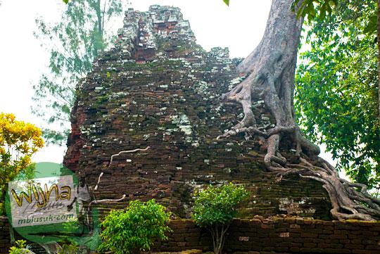 Pohon besar yang tumbuh di reruntuhan Candi Lor Nganjuk di tahun 2015