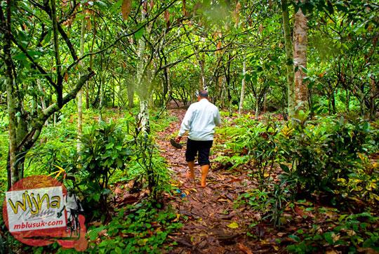 Kebun cokelat lampung dijual lokasi dekat Air Terjun Kembar Lamuran di Tanggamus, Kotaagung pada Maret 2015