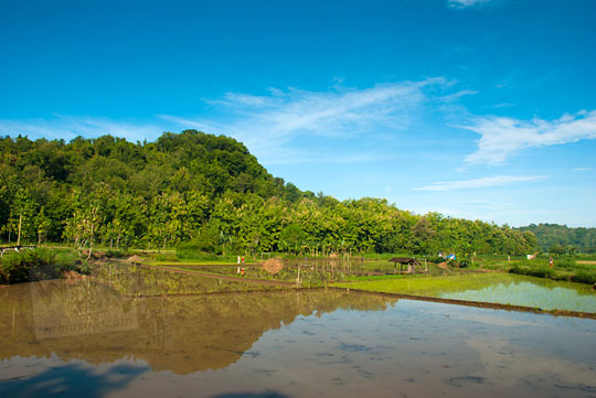 pemandangan sawah di imogiri bantul yogyakarta