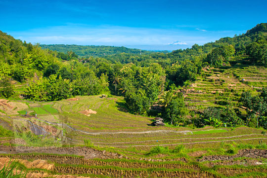 pemandangan indah sawah di imogiri yogyakarta dari puncak bukit mirip seperti di bali