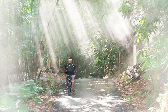 bersepeda menerjang kilau cahaya di dalam hutan imogiri