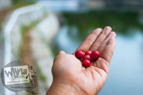 Merasakan buah talok dijual di sekitar Embung Gancahan, Donomulyo Asri, Godean, Sleman, Yogyakarta