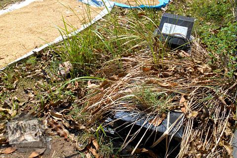 kondisi kuburan tua pemakaman angker di galur, kulon progo, yogyakarta yang tidak terawat karena ahli waris yang tidak bertanggung jawab