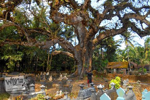 pohon besar tua dan angker yang dikelilingi nisan makam kuburan di wilayah galur kulon progo yogyakarta