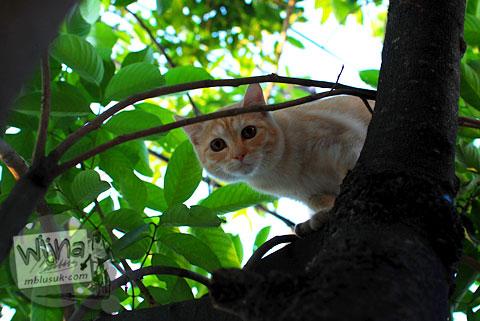 Kucing mistis siluman di sarang penyamun Gunungkidul