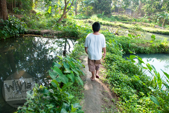Suasana Mata Air Sendang Ayu di Kalasan, Yogyakarta pada tahun 2015