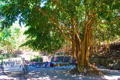 pohon beringin besar dan angker yang terletak tidak jauh dari lokasi Sendang Bayutemumpang di Desa Bangunjiwo, Kasihan, Bantul, Yogyakarta