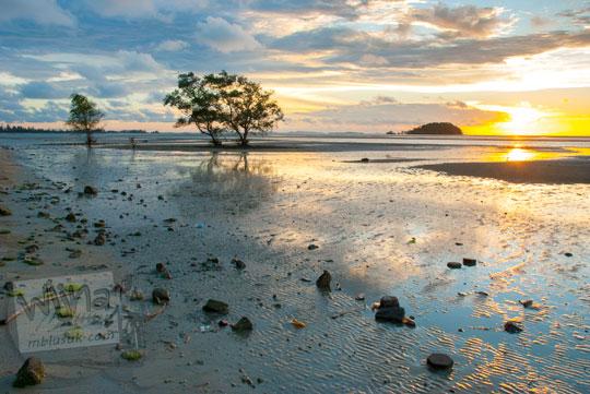 Spot pohon yang fotogenik di Pantai Tanjung Pendam Belitung di tahun 2016