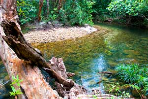 Thumbnail artikel blog berjudul Horor di Dalam Hutan Taman Wisata Alam Batu Mentas