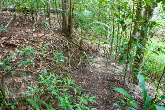 cerita bertemu penampakan bayangan hantu di dalam Hutan Taman Wisata Alam Batu Mentas di Belitung Maret 2016