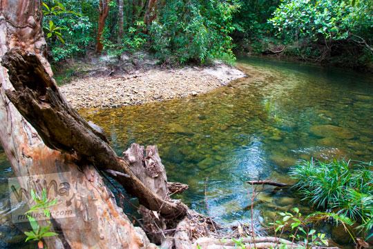sekelebat bayangan menghantui pengunjung Hutan Taman Wisata Alam Batu Mentas saat berjalan kaki ke air terjun di Belitung Maret 2016