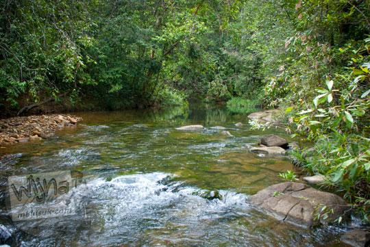 ujung jalan menyusuri pinggir sungai di dalam Hutan Taman Wisata Alam Batu Mentas ke arah air terjun tersembunyi di Belitung Maret 2016