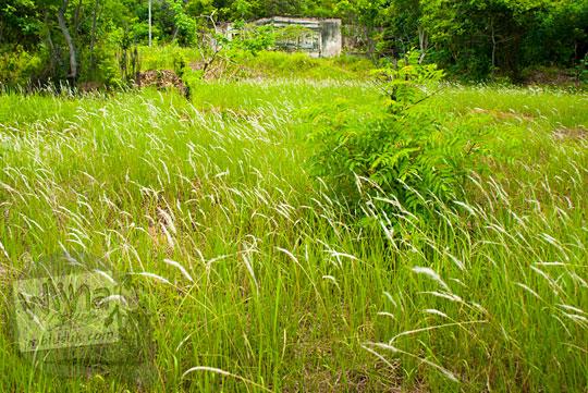 rumah tua berhantu peninggalan Belanda di pinggir Pantai Nyiur Melambai di Belitung Timur yang dikelilingi ilalang lebat terletak di puncak bukit pada Maret 2016