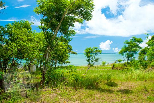 pemandangan ke arah laut dan hamparan rumput ilalang dari teras suatu rumah tua angker yang letaknya dekat dengan Pantai Nyiur Melambai di Belitung Timur pada Maret 2016