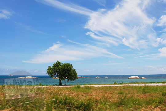 suasana pinggir jalan raya sijuk di desa keciput Belitung dengan hamparan pantai berpasir putih batu granit ada pohon fotogenik pada Maret 2016