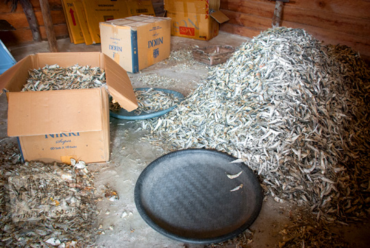 kardus-kardus berisi tumpukan penuh ikan asin kering yang menggunung diekspor nelayan desa Tanjung Binga Belitung ke pontianak dan balikpapan pada Maret 2016