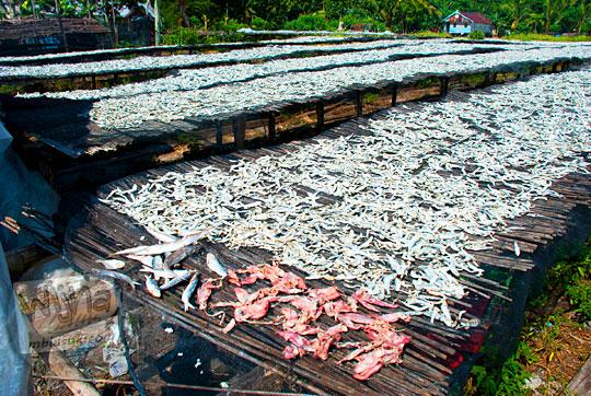 pemandangan ikan asin, udang, cumi, dan hasil laut lain dijemur kering di desa nelayan Tanjung Binga Belitung pada Maret 2016