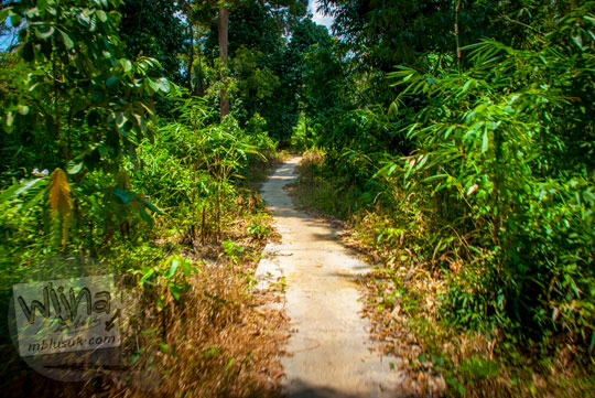 Suasana jalan setapak di dalam hutan di Kompleks Percandian Muaro Jambi ditempuh menggunakan sepeda sejauh 2 km dari Candi Gumpung menuju Candi Sialang Muaro Jambi pada April 2015