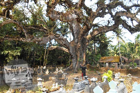 kuburan dengan pohon besar angker di dekat Pantai Trisik, kecamatan Galur, Kulon Progo di tahun 2015